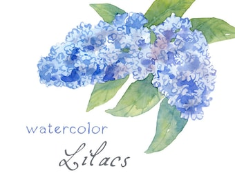 Digital Clipart, Watercolor Flowers, Watercolor Lilacs, Blue
