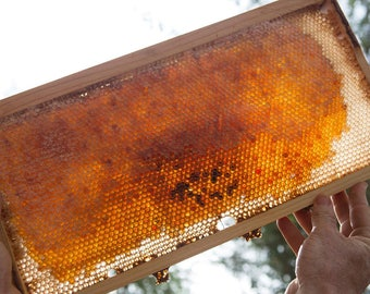 "Ayurvedic ""Golden Honey"" w/ Turmeric, Locally and Organically Farmed + Raw Hawaiian Honey, Organically Raised, from Rescued Beehives"