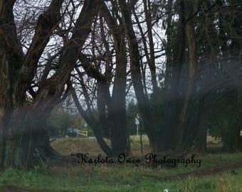 Nature Photography Print - Color Photography Print - Fine Art Photograph - Home Decor - Tree  Photograph Print