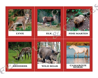 12 Animals of Europe, Montessori Learning Cards for combining with the world map of the continents, materials color coded Montessori