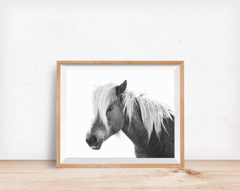 Horse Photo with White Background, Icelandic Horse Print, Physical Print