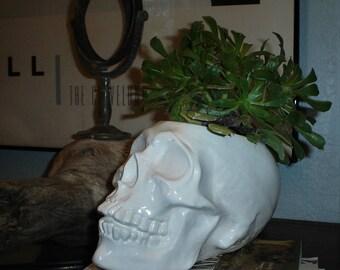 Skull Planter, White Ceramic Skull Succulent Planter, Ceramic Skull Planter, Indoor Plant Pot, Human Skull Planter, Cactus Planter