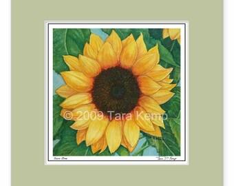 Sun One Sunflower - Archival botanical 8x8 print in a 12x12 mat, from original drawing by Tara Kemp