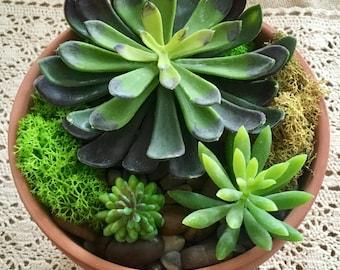 large terra cotta arrangement/succulent planter/large terra cotta planter/terra cotta planter/indoor succulent planter/succulent planter