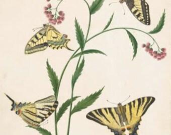 Vintage butterflies on flowers