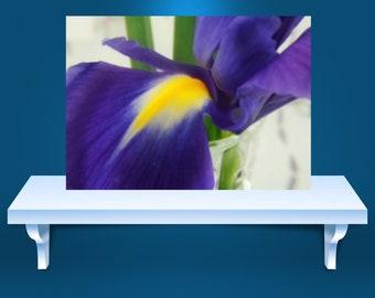 Photography Prints, floral prints, fine art photography prints, floral print, wall art, wall prints, wall posters, flowers, flower prints