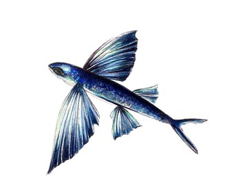 "Flying Fish Print:   Digital print of an original drawing available 5x7"" or 8x10"""