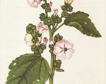 """BOTANICAL: nourishing FACIAL CREME """"marsh mallow"""" (100 ml / 3.4 oz) for damaged skin"""