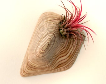 Carved wooden stand with Tillandsia