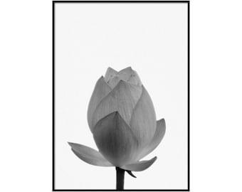 Black and White Art, Flower Bud, Botanical Art Print, Garden Print, Home Decor #012