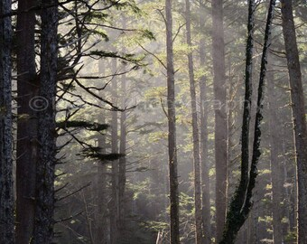 Pacific Northwest Forest Moody Quiet Winter Mist Sunlight, Morning Light, Fine Art Photography signed matted 5x7 Original Photograph