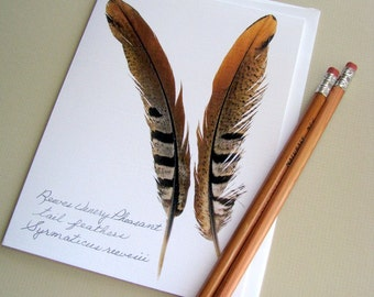 Feather card, Reeves Venery Pheasant tail feathers, aviary card, unique feather card, bird feather greeting card, no.14