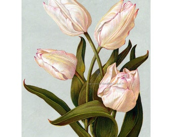 Tulip Flowers Card - Vintage Style Greeting Card - Birthday Card - Thank You Card