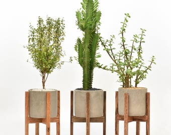 Small - Mid Century Modern Plant Stand with Cement Pot, Indoor Plant Stand with Concrete Pot, Modern Planter Stand with  Cement Pot