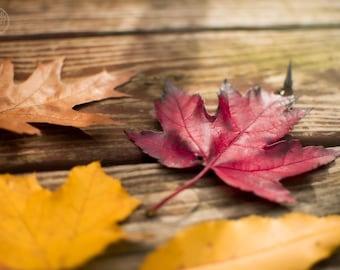 Fall Wall Art | Fall Leaves Wall Art | Fall Leaves Photography | Leaf Photography | Fall Photography| Leaf Wall Art