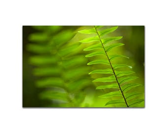 Abstract of fern fronds Patterns in Fine Art Print Photograph Green Tones Print Wall Art Botanical Photo Contemporary Style Abstract