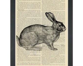 Kaninchen-Vintage Zeichnung Wörterbuch Kunstdruck