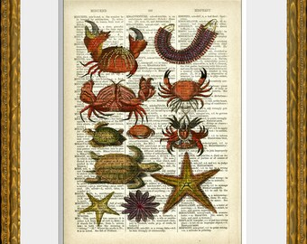 Book Page Art - SEALIFE COLLAGE 02 - an upcycled antique dictionary page with a retooled antique sea illustration - sealife home decor