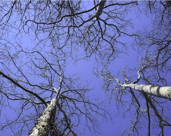 White Spring Tree Tops