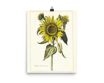 Vintage Sunflower Matte Poster