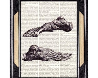 ANATOMICAL FOOT art print wall decor human anatomy Osteology Orthopedic Doctor Office medical science on vintage dictionary book page 8x10