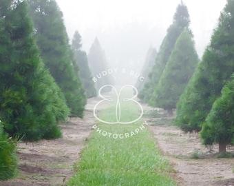 Misty Christmas Tree Farm Digital Background