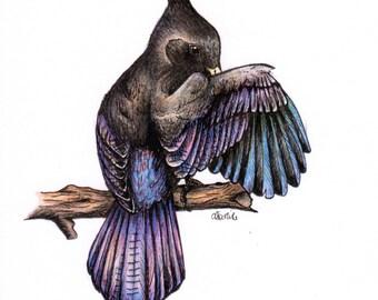 Stella's Jay illustration / art print / A5 size