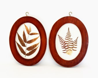 Set of Framed Pressed Fern Fronds Displayed in Oval Shaped Wooden Frames with Gold Hooks on Top For Hanging