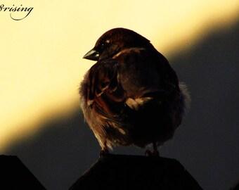 Thinking, Photography, Wall Art, Wall Decor, Nature, Bird
