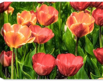 Wild Tulips - Fine Art Canvas Print - Indoor Art or Outdoor Art