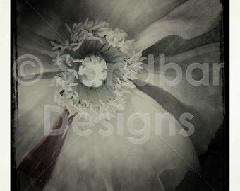 4 x 4 ohoto card- flower