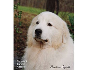 Great Pyrenees Flag, Great Pyrenees Gift, Great Pyrenees Art, Great Pyrenees