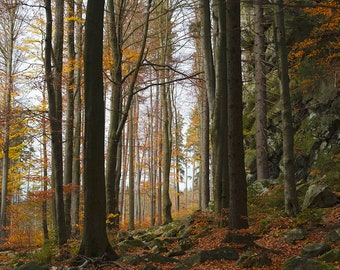 Forest path - printable high resolution digital image of a rocky forest path covered with fallen leaves in the autumn