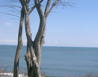 Tree by the Ocean- Photograph