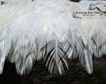 """Craft Feathers White Feathers Chicken Feathers Natural Cruelty Free Feathers Real Bird Feather Rooster Feathers For Crafts Qty 30 1.5-2.5"""""""