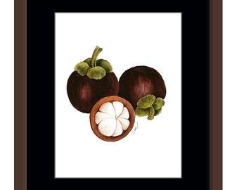 Mangosteen fruits. Fruit art.  Fruit print. Watercolor fruits. Watercolor art Giclée print. Kitchen art. Small print. Fruit painting.