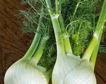 Florence Fennel 4,000+ Seeds - Bulk Herb Seeds - Canada - 25 Grams