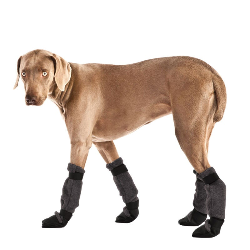 Dog With New Shoes