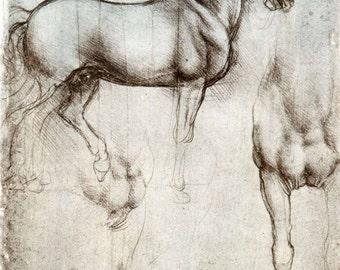 Leonardo da Vinci ~  Study of a Horse ~ Gran Cavallo Print - Italian Renaissance ~ Wall Art Classic - Horse Wall Art - Equine Art