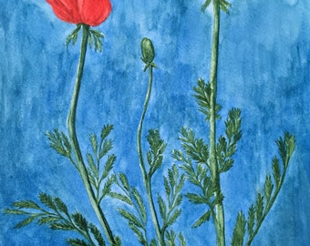 Red Poppies Original Watercolor Painting Botanical Illustration