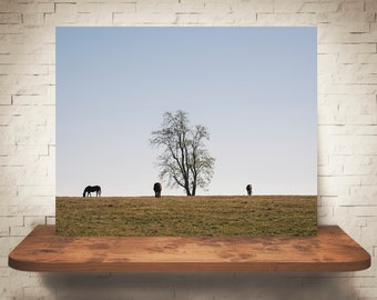 Horse Photograph - Fine Art Print - Color Photography - Equine Wall Art - Wall Decor -  Horse Pictures - Farmhouse Decor - Horses - Tree