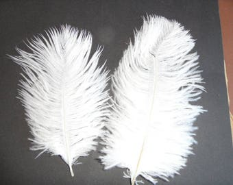 assorted feathers ostrich sweetness, 18cms 15 2 pure white.