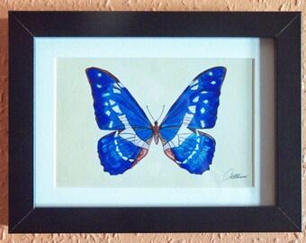 Schmetterling-Rahmung blauer Schmetterling Schmetterling Print - Helena-Amazon Blue Morpho. Ein beliebtes Schmetterling macht das perfekte Geschenk!