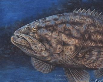 Goliath Grouper - 5 x 7 Fine Art Print - By Laura Airey Le