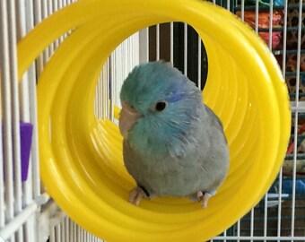 Curly Q - Small Bird Toy  Budgie Parrotlet Lovebird Green Cheek Pet Bird Toy Bird Perch Parrot Toy