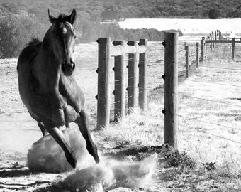 3 x Photos of Horses running, a set of three photos for home decor in black and white  photography  Horse Print Wall Art