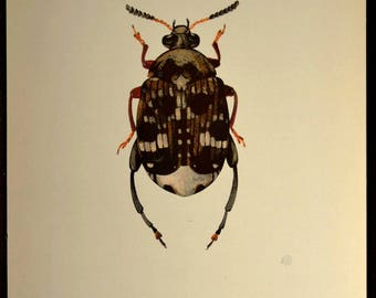 Bug Print Beetle Wall Art Print Nature Decor Insect Cabin Illustration