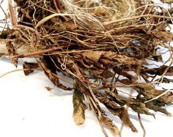 Twiglet Nest