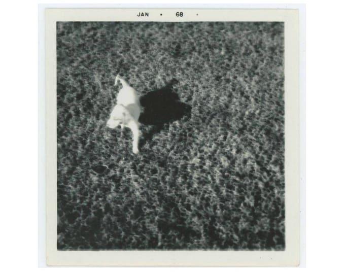 Vintage Snapshot Photo: Dog & Shadow, 1968 (75583)