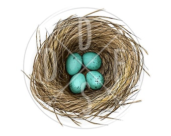 A0173 - Bird Nest, Quail Turquoise Eggs, Easter Vibes  - Digital Print for Instant Download. Printable Illustration. PNG, JPG files 8x10''.